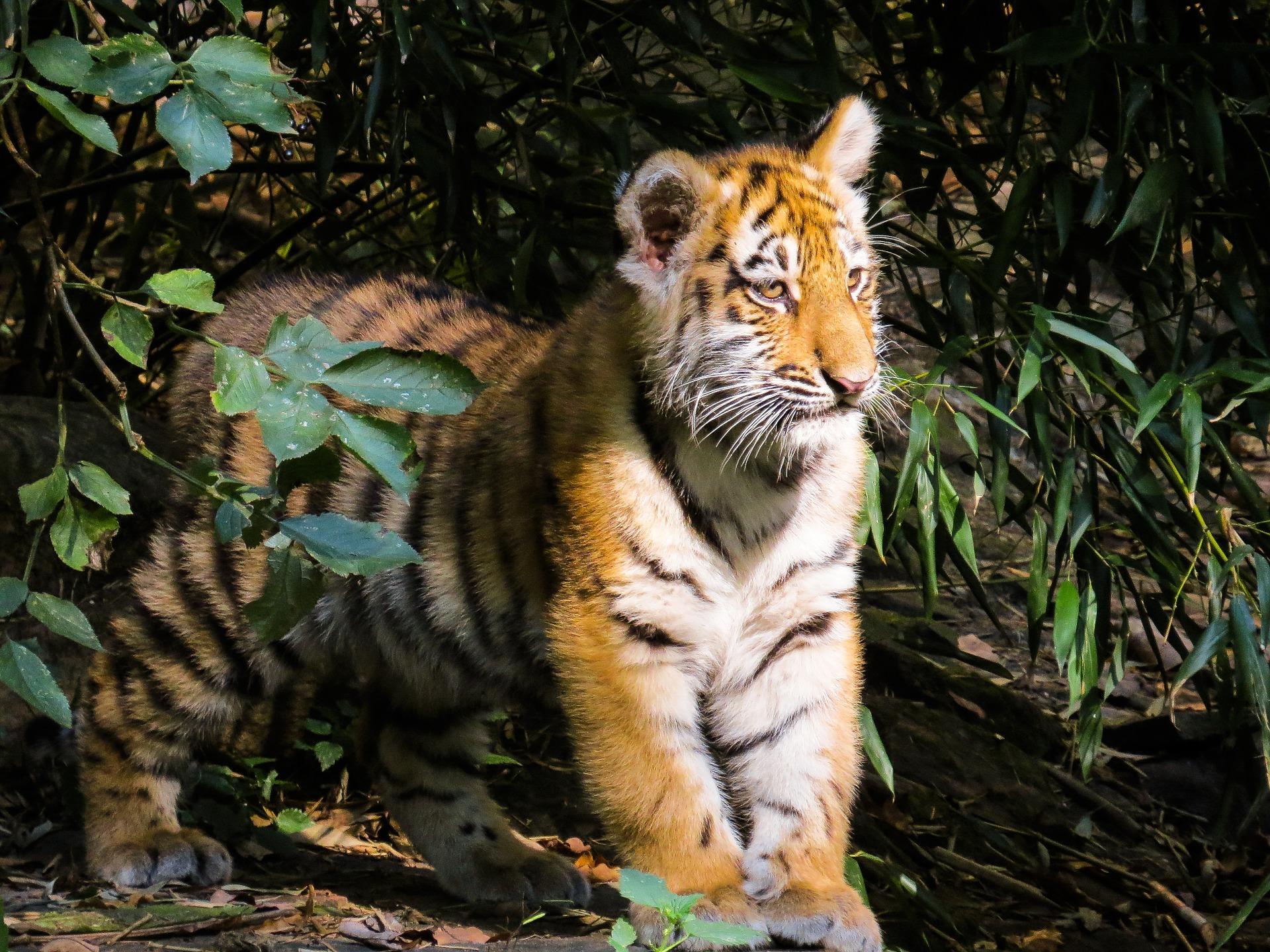 best resorts in tadoba tiger reserve tadoba national park hotels rh tigersheavenresort co in