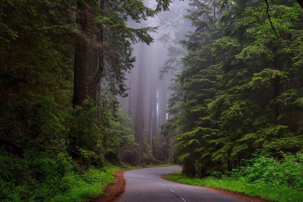 Power of Green Nature, Tadoba