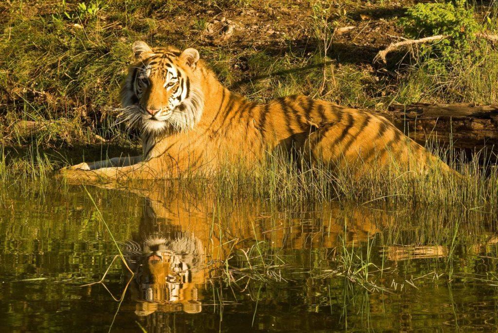 Wildlife Photography, Tadoba